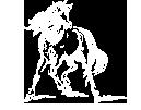 corsiero-cavallo